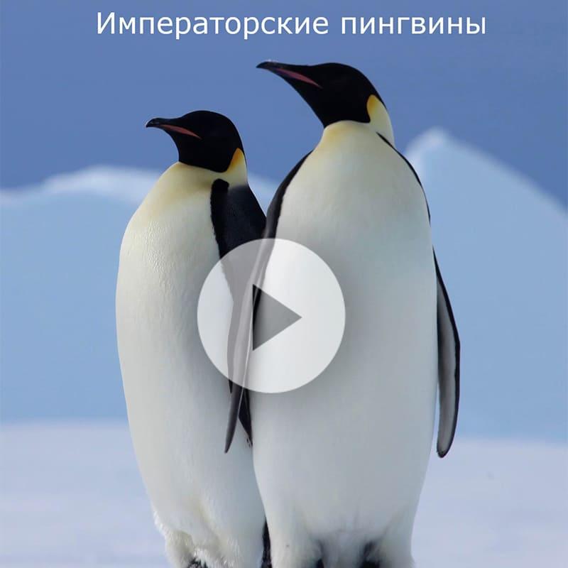 vid_antarktika2